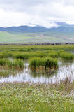 Meadow. Beautiful meadow with abundant water Stock Images