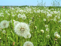 Meadow Stock Photo