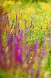 meadow zdjęcie stock