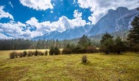 meadow Zdjęcie Royalty Free