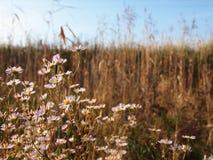meadow Obraz Royalty Free