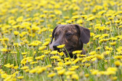 In the meadow Stock Photography