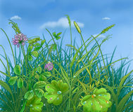 Meadow. With a grass and colors in the morning. Dew Royalty Free Stock Photos