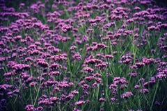 meadow Obraz Stock