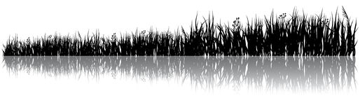 Meadow. Black silhouette of a meadow grass with shadow on a white background Stock Photography