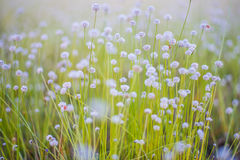 Free Meadow Royalty Free Stock Photography - 65154637