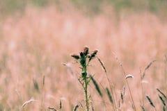 meadow Zdjęcia Stock