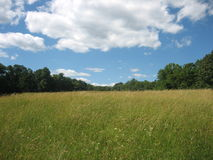 Meadow Stock Images