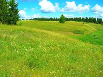 Meadow stock photography
