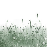 Meadow. Abstract background from a flowers simulating meadow and the sun Stock Images