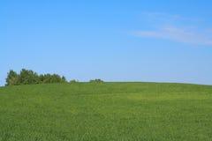 - meadow Zdjęcia Stock