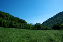 Meadow. Green summer meadow somewhere in the middle of Italian Apennines Stock Photo