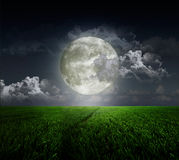 Meadow abd moon. Meadow on background of the moon vector illustration