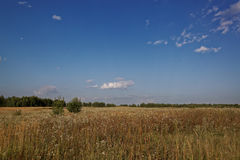 Meadow against a blue sky with white clouds Stock Photography