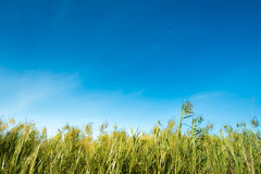 Meadow against bright sky Stock Photo