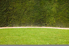 Meadow against a green fence wall Stock Photography