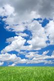 Meadow against summrer sky Royalty Free Stock Image