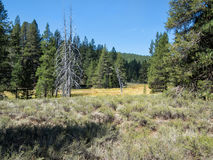 Meadow along the Emigrant Trail royalty free stock images