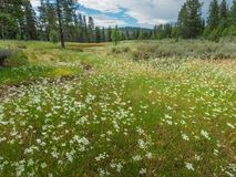 Free Meadow Along The Emigrant Trail Stock Photo - 154554960