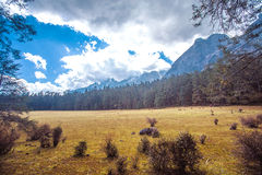 Meadow. Alpine forest at an altitude of over 2,000 meters Stock Photos