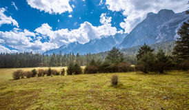 Meadow. Alpine forest at an altitude of over 2,000 meters Royalty Free Stock Photo