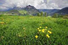 Meadow in the Alps Royalty Free Stock Photography