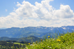 Meadow with alps background Royalty Free Stock Images