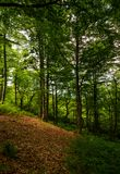 Meadow in ancient beech forest. Lovely nature scenery in Carpathian woods Royalty Free Stock Photo