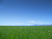Free Meadow And Blue Sky Stock Photography - 5333952