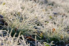 Free Meadow And Hoarfrost Stock Photo - 26468860