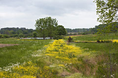 Meadow And Pond Royalty Free Stock Photography