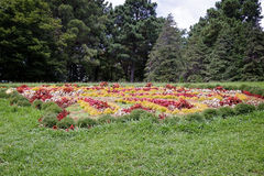 Meadow in the arboretum, decorated with beautiful flowers. Royalty Free Stock Photo