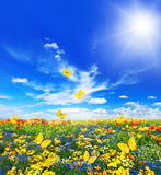 Meadow with assorted flowers and butterflies Royalty Free Stock Images