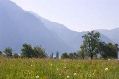 Meadow in austria Stock Photo