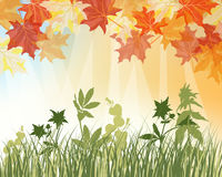 Meadow autumn background Stock Image
