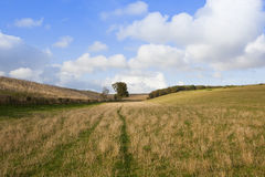 Meadow in autumn Stock Photography
