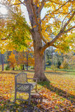 Meadow in autumn park with bench under big tree Royalty Free Stock Images