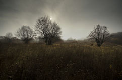 Meadow in autumn with trees Stock Photos