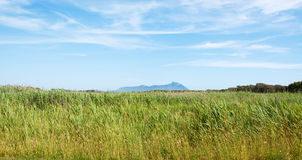 Meadow with the backdrop of San Felice Circeo Lati Royalty Free Stock Images