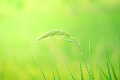 Meadow background Royalty Free Stock Photos