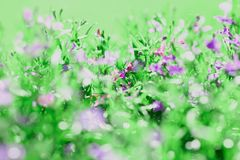 Meadow background of grass summer spring Royalty Free Stock Photography