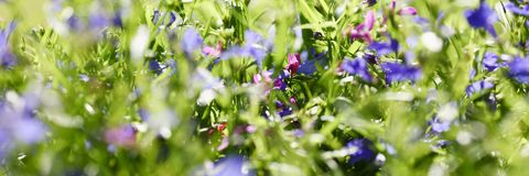 Meadow background of grass summer spring Royalty Free Stock Image