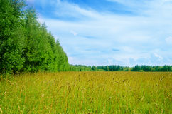 Meadow background Royalty Free Stock Photography