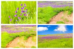 Meadow Backgrounds Collage Royalty Free Stock Images