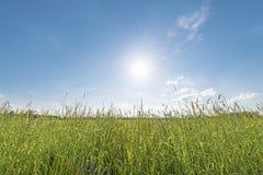 Meadow backlit horizontal Stock Photography