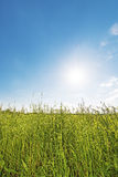 Meadow backlit vertical Royalty Free Stock Photo