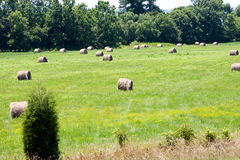 Meadow with bales of hay royalty free stock photo