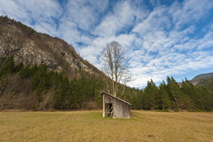Meadow with barn and big tree.  Stock Photos