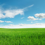 Meadow Stock Image