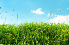 Meadow and beautiful blue sky Royalty Free Stock Photos